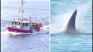 did-fishermen-off-the-coast-of-australia-encounter-a-giant-megalodon-shark