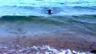 波が荒かったけど、バタバタ泳ぎました!