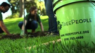 TreePeople - How to Plant a Tree