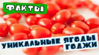 🎥 Факты о ягодах. Уникальные свойства ягод Годжи.