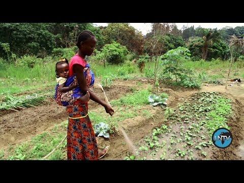 République du Congo: Les graines de l'espoir
