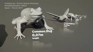 Сравнение размеров животных