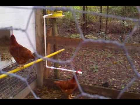 Gravity Fed Rain Barrel Chicken Waterer System Youtube