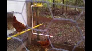 Gravity Fed Rain Barrel Chicken Waterer System