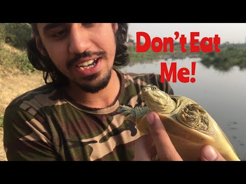 FOUND A TURTLE! WOW! | Wildly Indian