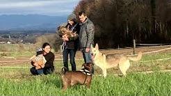 Kiara - Schäferhund Husky Mischlings Hündin