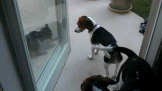 dogs chase the cat