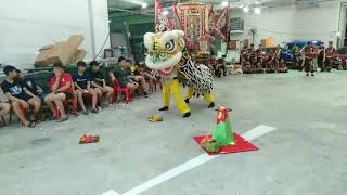 SG Hok San Association Traditional Hok San Lion Dance Performance at Ci Bei Ma Zhu Gong 20 Apr 2019