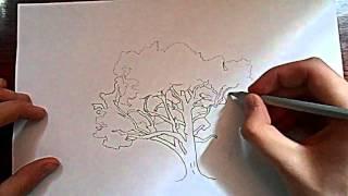 Видео: как нарисовать дерево?(обучающее видео по рисованию дерева простым карандашом поэтапно для начинающих., 2015-12-27T17:34:33.000Z)
