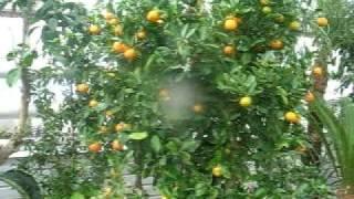 Зимний сад(Растения для зимнего сада, 8-909-163-70-80., 2011-04-05T10:14:32.000Z)