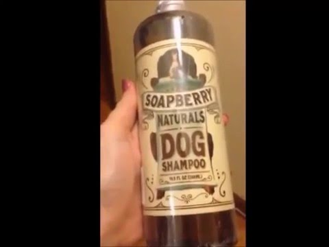 Best Dog Shampoo Review