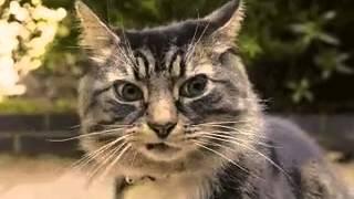 Кот чувствует засаду