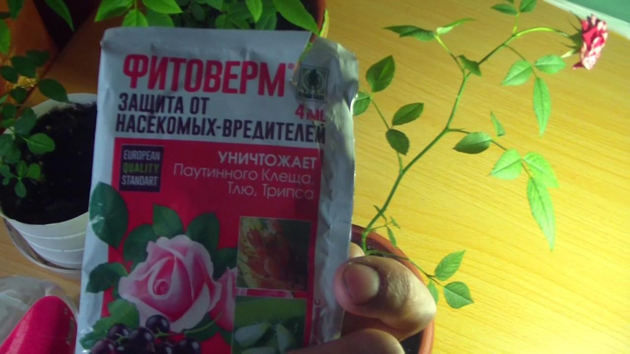 Фитоверм для комнатных растений: инструкция по использованию