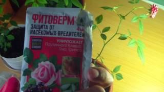 Препарат фитоверм: инструкция по применению для комнатных растений + видео