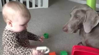 Best Friends- Baby & Her Weimaraner