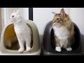 やんちゃな猫のトイレ事情