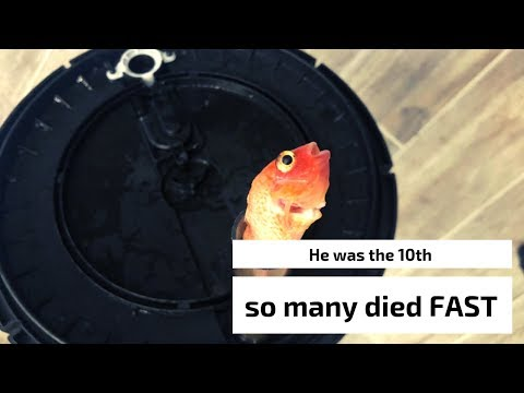 SO Many Cichlids DIED - Do Not Do This! - How To Correct It