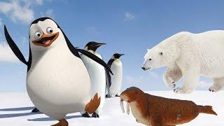 ПИНГВИН ГРЯЗНУЛЯ Мультфильмы про животных для детей