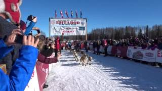 Very excited dogs Starting line at Iditarod 2016 restart Willow Lake, Alaska