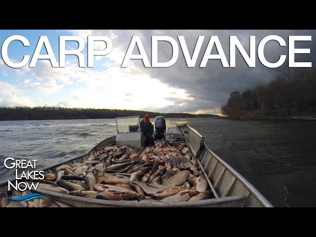 Carp Advance - Great Lakes Now - 1018 - Segment 3