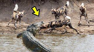 10 Batallas Épicas de ANIMALES captados en cámara   E.p 27   10 epic battles of animals captured