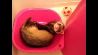 9月に録った動画です。 洗面器に収まって、よく昼寝してました^^;
