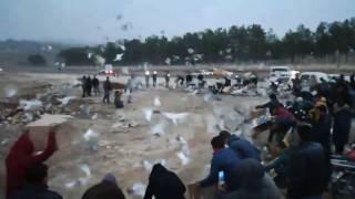 Şanlıurfa Bağlarbaşı ve Sigorta Semti Güvercin Döküşü 1