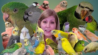 Meet all my birds | I have 29 birds and I show you two new species that I added to my flock