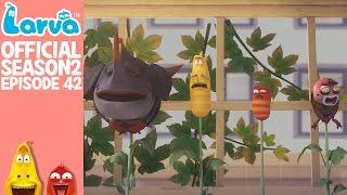 Video [Official] Beanstalks - Larva Season 2 Episode 42 download MP3, 3GP, MP4, WEBM, AVI, FLV Juli 2018