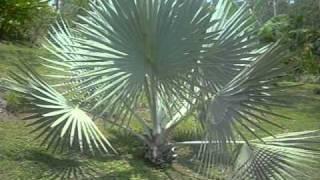 Living The Dream,Villas De Las Aves - The Gardens
