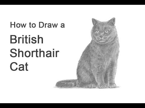 how-to-draw-a-cat-(british-shorthair)