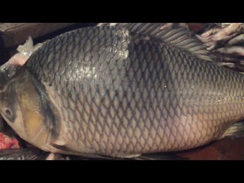 Big Fish Slicing | Huge Katla Fish Cutting...