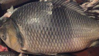 Big Fish Slicing | Huge Katla Fish Cutting into Pieces in the Fish Market