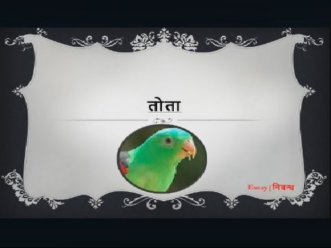 Hindi Essay On 39parrot39 For Kids 3939 Youtube