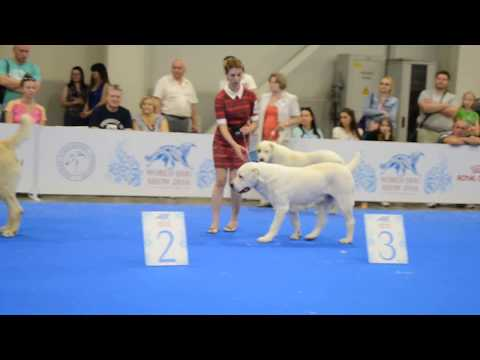 World Dog Show 2016 - Central Asian Ovcharka