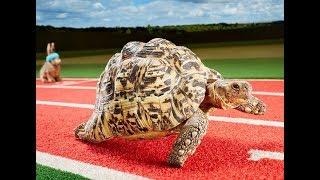 Warframe - Dojo Obstacle Course Speedrun - 00:10.83