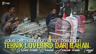 Download lagu wajib dipahami setting kangen lovebird pasangan dari bahan