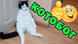 Кот, который сидит как человек ✅Я - бог с хвостом