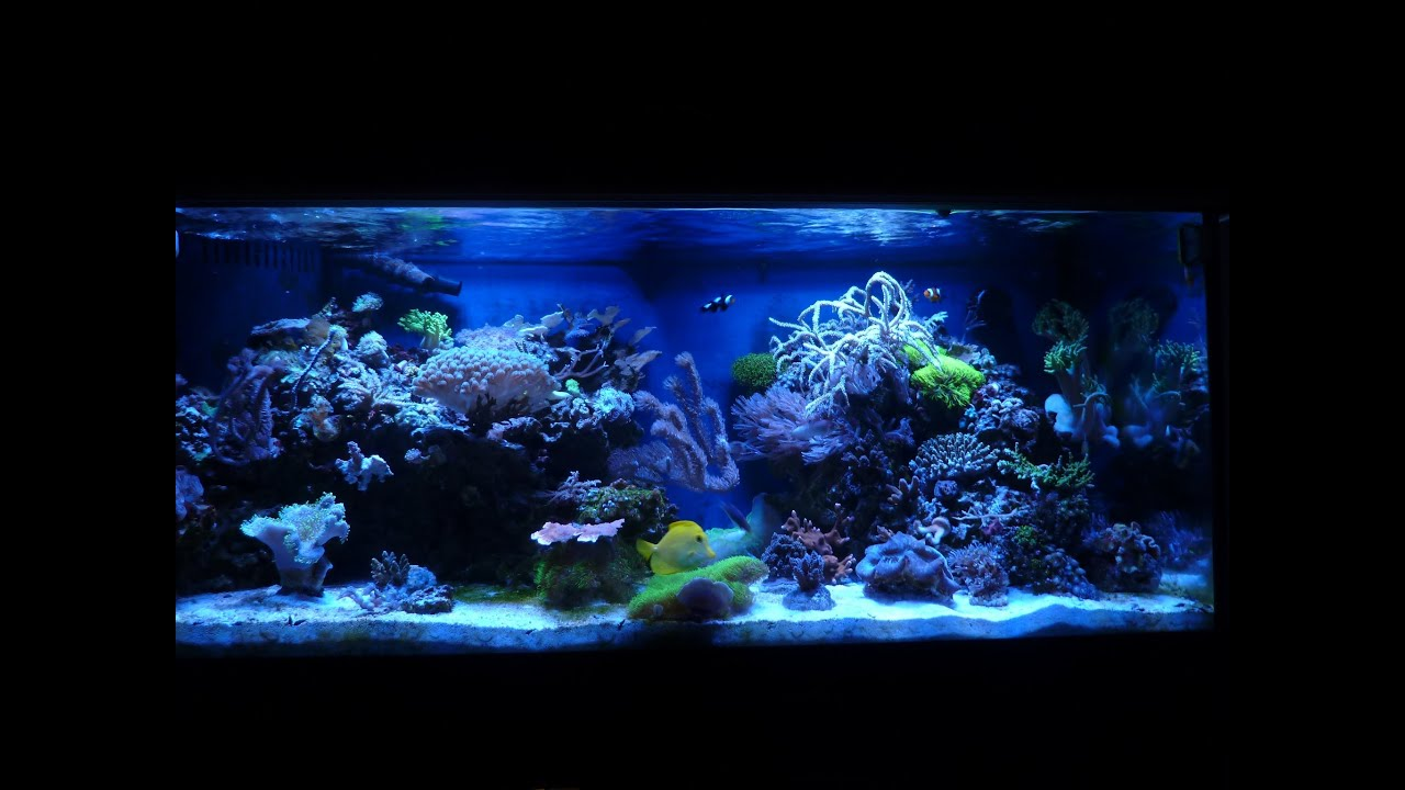 Coral Reef Fish Aquarium 75 Gallon HD Saltwater Tank Update!   YouTube