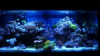 Coral Reef Fish Aquarium 75 Gallon Hd Saltwater Tank Update!