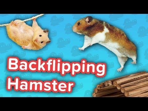 Backflipping Hamsters & Pony Soccer! // Funny Animal…