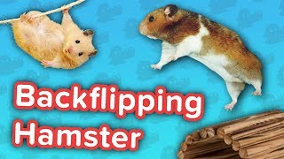 Backflipping Hamsters & Pony Soccer! // Funny Animal Compilation