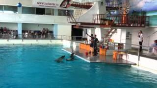 Дельфинарий г.Набережные челны.