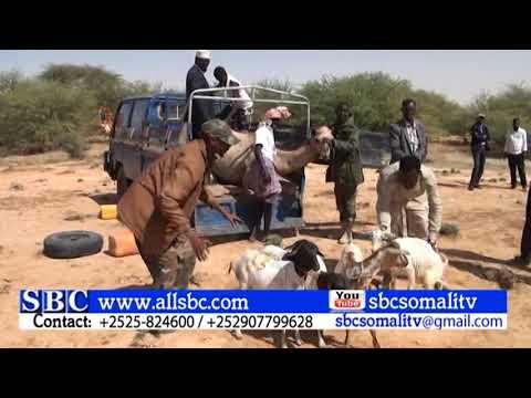 CIIDMADA PUNTLAND EE KU SUGAN JIIDA DAGAALKA SOMALILAND IYO PUNTLAND OO DEEQ LA GAARSIIYAY