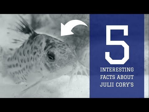 5 INTERESTING FACTS ABOUT JULII CORY'S