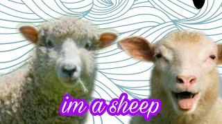 Beep beep im a sheep    ROBLOX music video   cc sisters