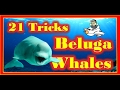 21 Tricks Beluga Whales can do, Japan Nagoya Port Aquarium 白鲸的21招 日本名古屋海游管