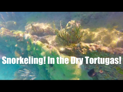Snorkeling in the Dry Tortugas!! Day Trip to Fort Jefferson! J_Harter