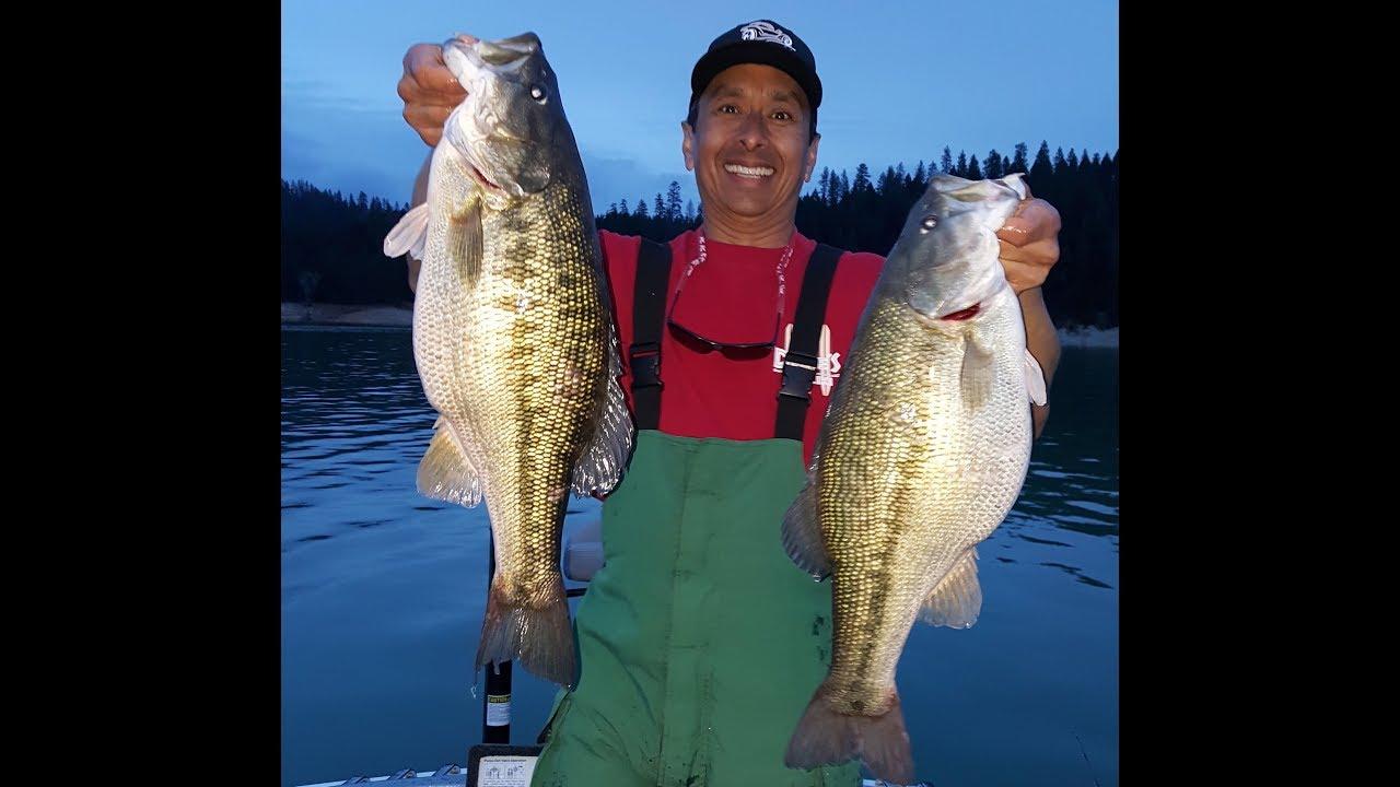 Two huge spotted bass bullards bar lake 37 5 limit bass for Bullards bar fishing report