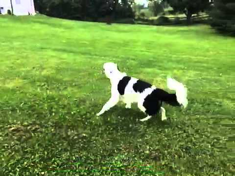 Hero The Border Collie Does AMAZING Tricks!!